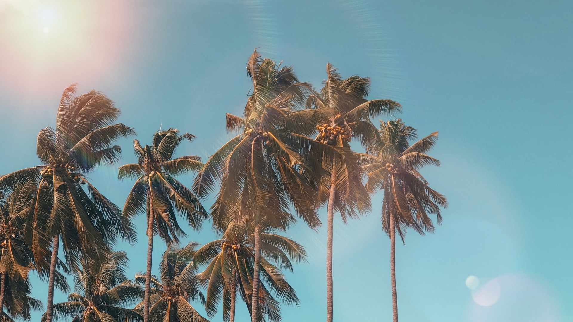 Summer backgrounds wallpapers
