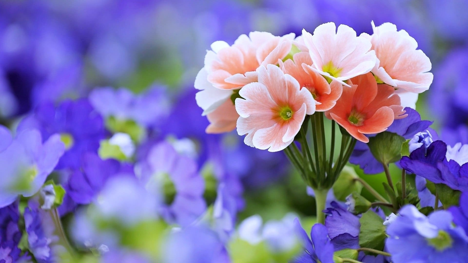 Flower background wallpapers