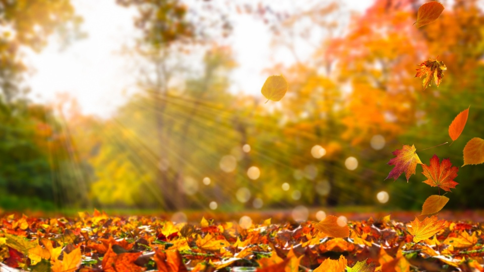 Fall Background wallpapers