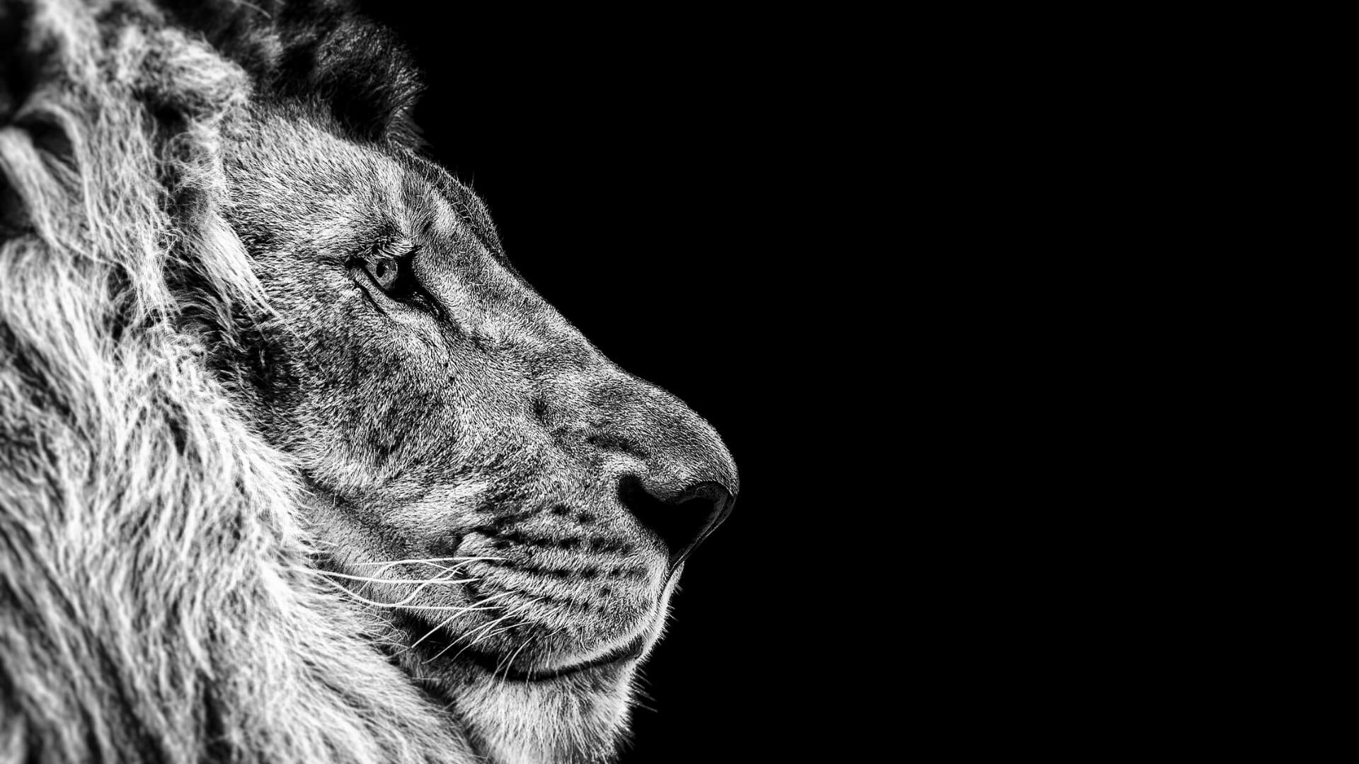 Images of lions