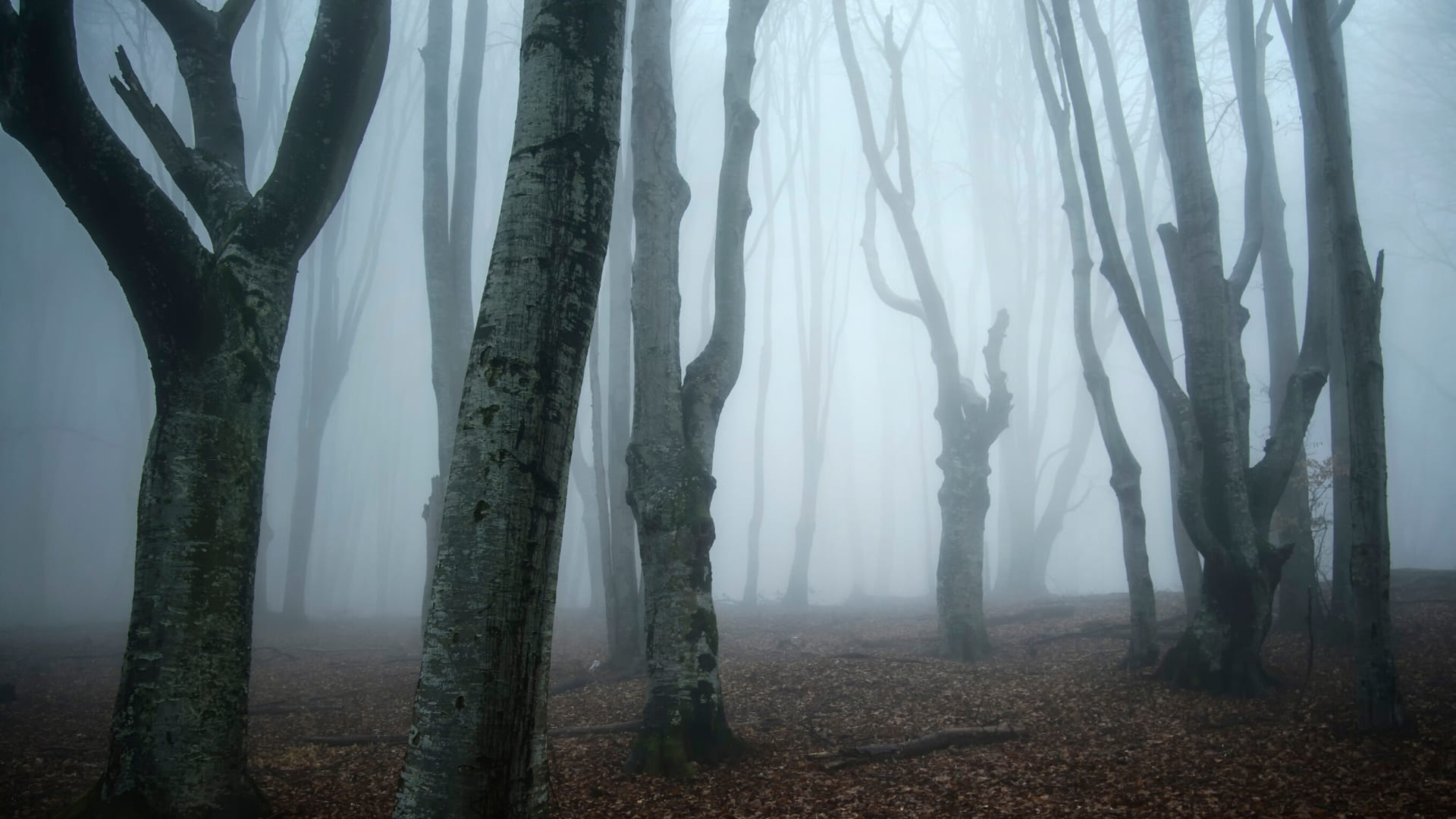 Creepy forest backgrounds