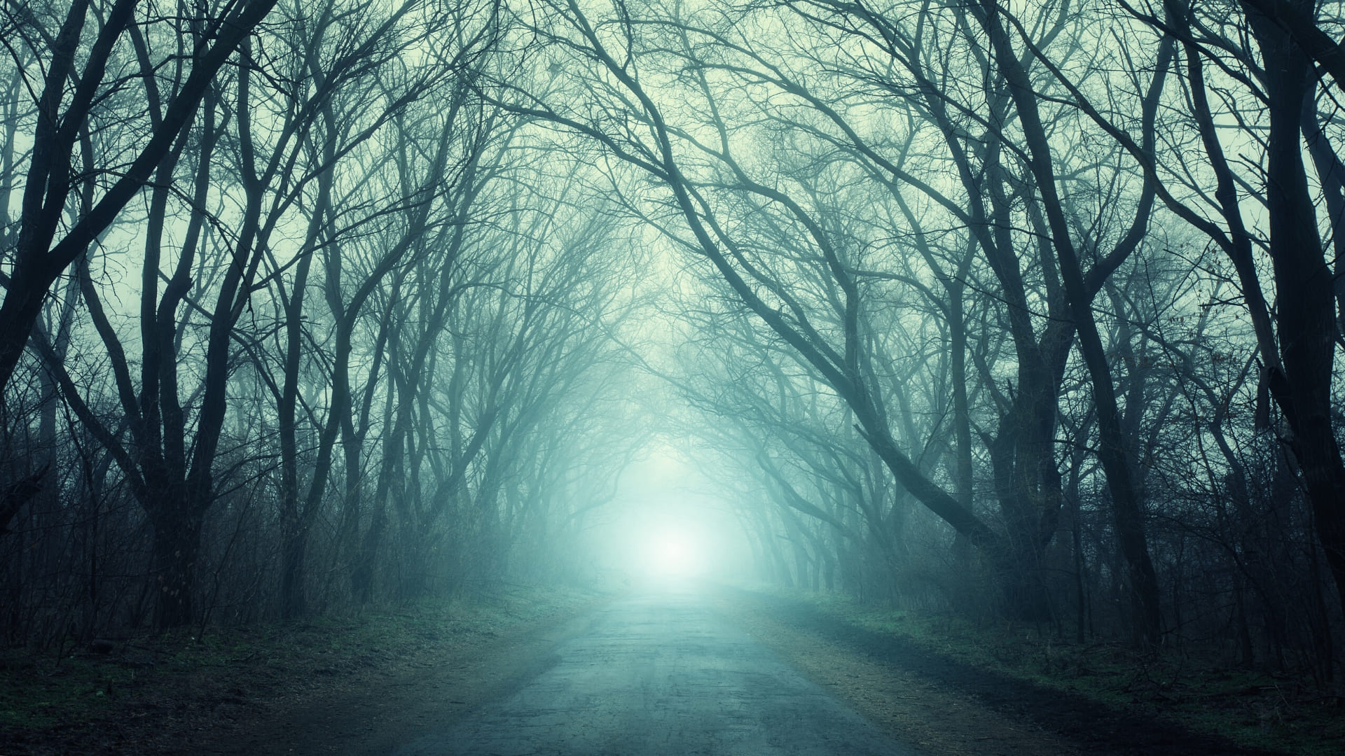 Scary woods wallpapers