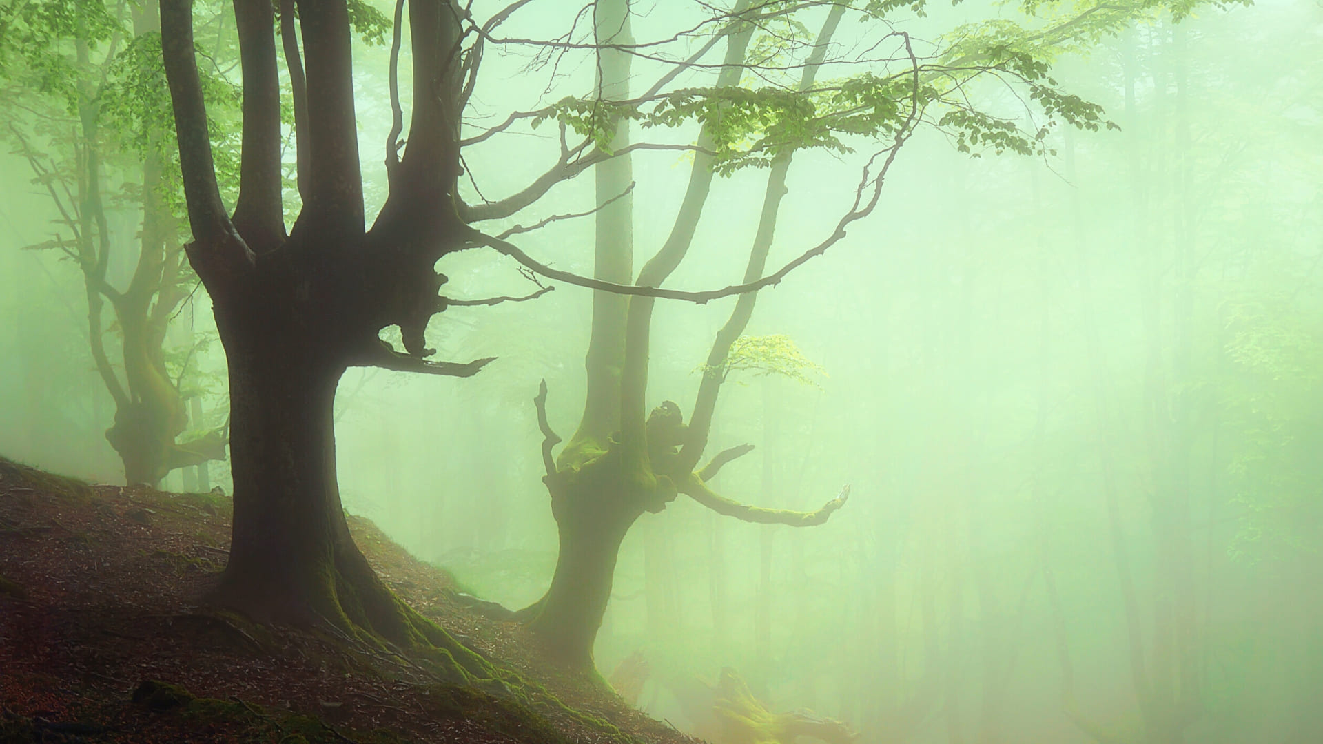 Spooky forest path background