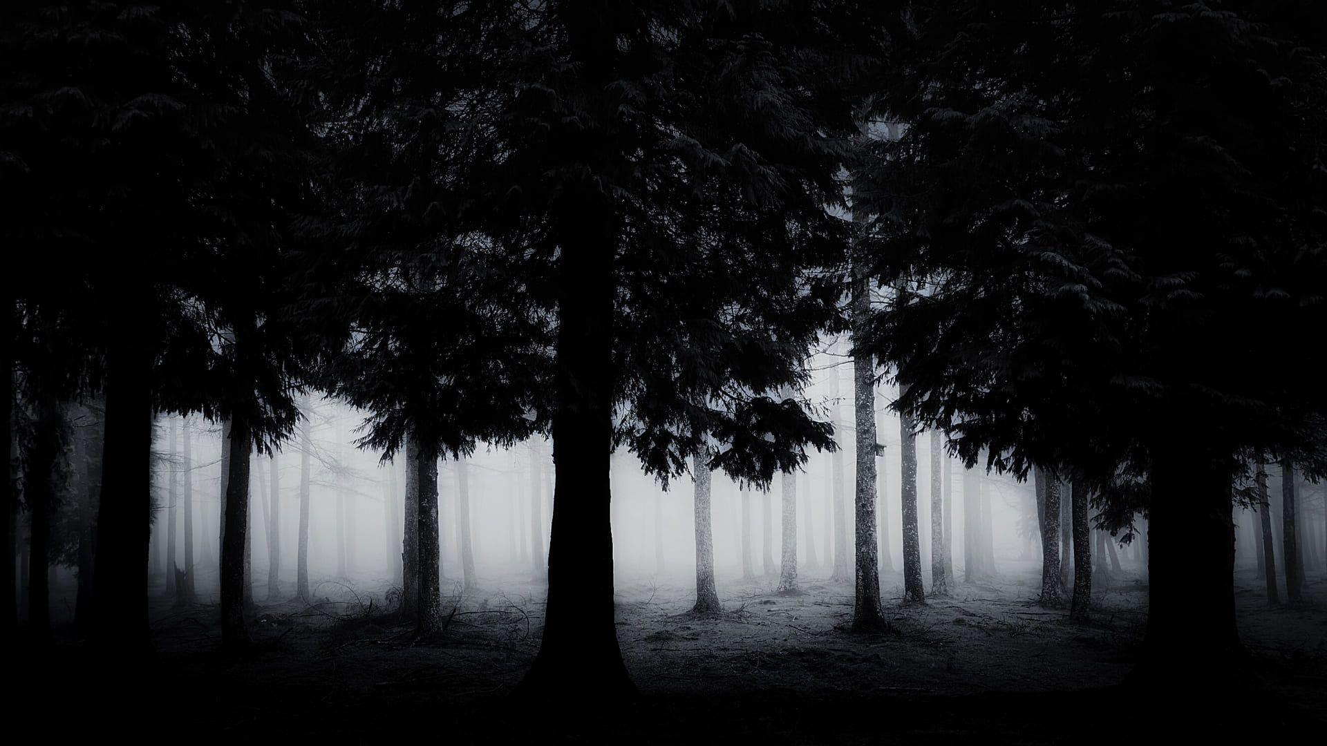 Haunted forest wallpaper