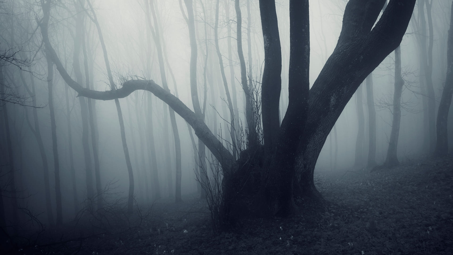 Haunted forest background