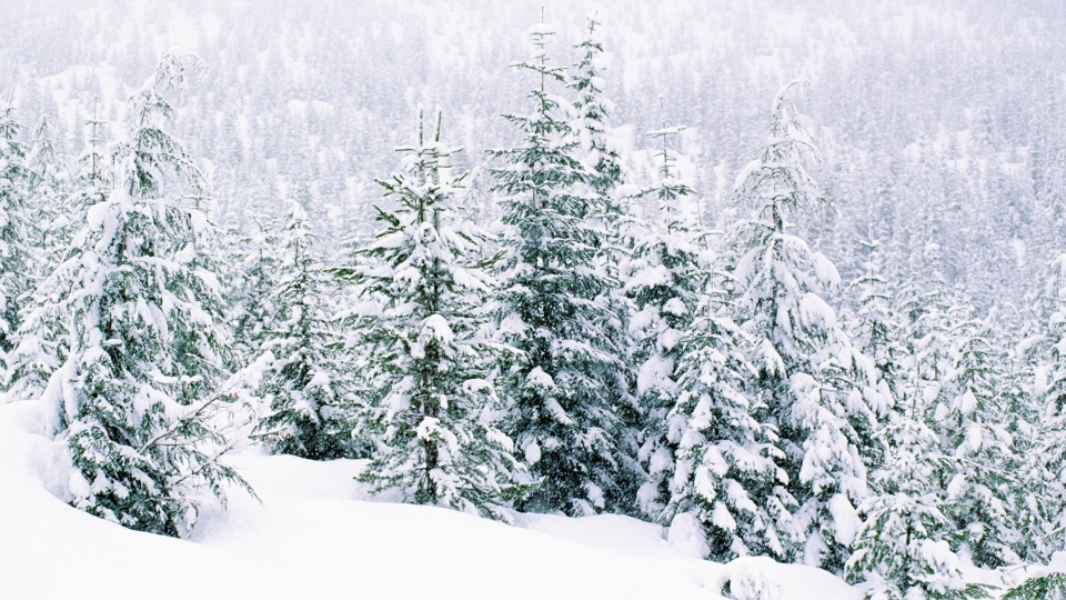 Snow fall wallpapers