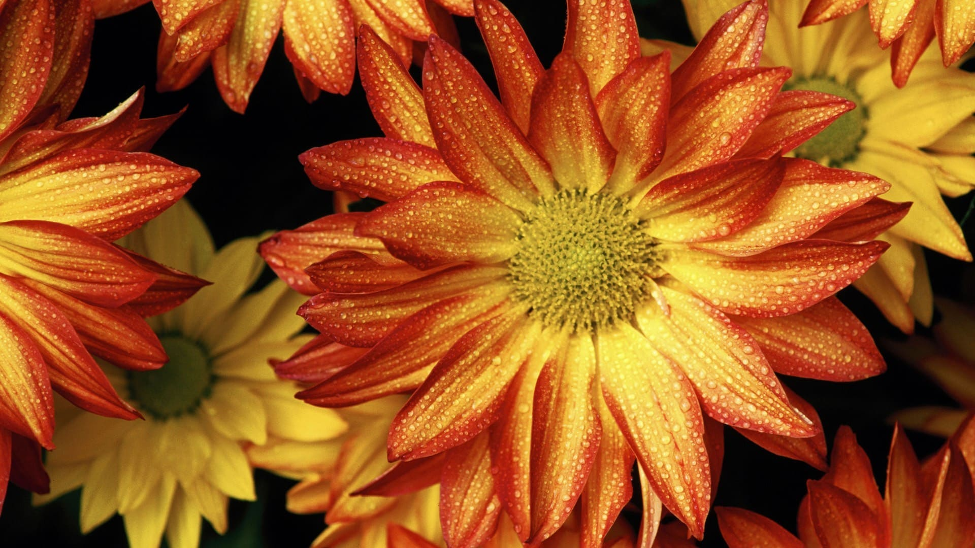 Fall flowers backgrounds